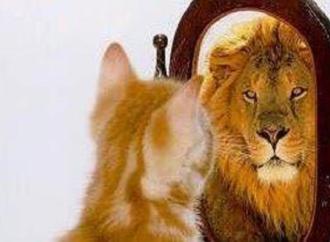 كيف خانَ الهرُّ الأمانة..؟ بقلم : ابراهيم يوسف – لبنان