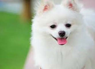 حدث هذا ايام الحرب على فيتنام – اعدام كلب بريِئ – بقلم : وليد رباح – امريكا